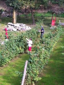 raccolta frutti di bosco