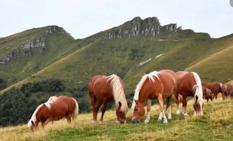 Cavalli del Bisbino
